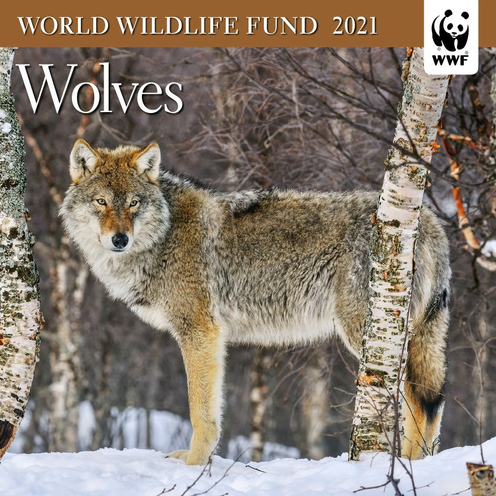 2021 Wolves WWF Mini Wall Calendar