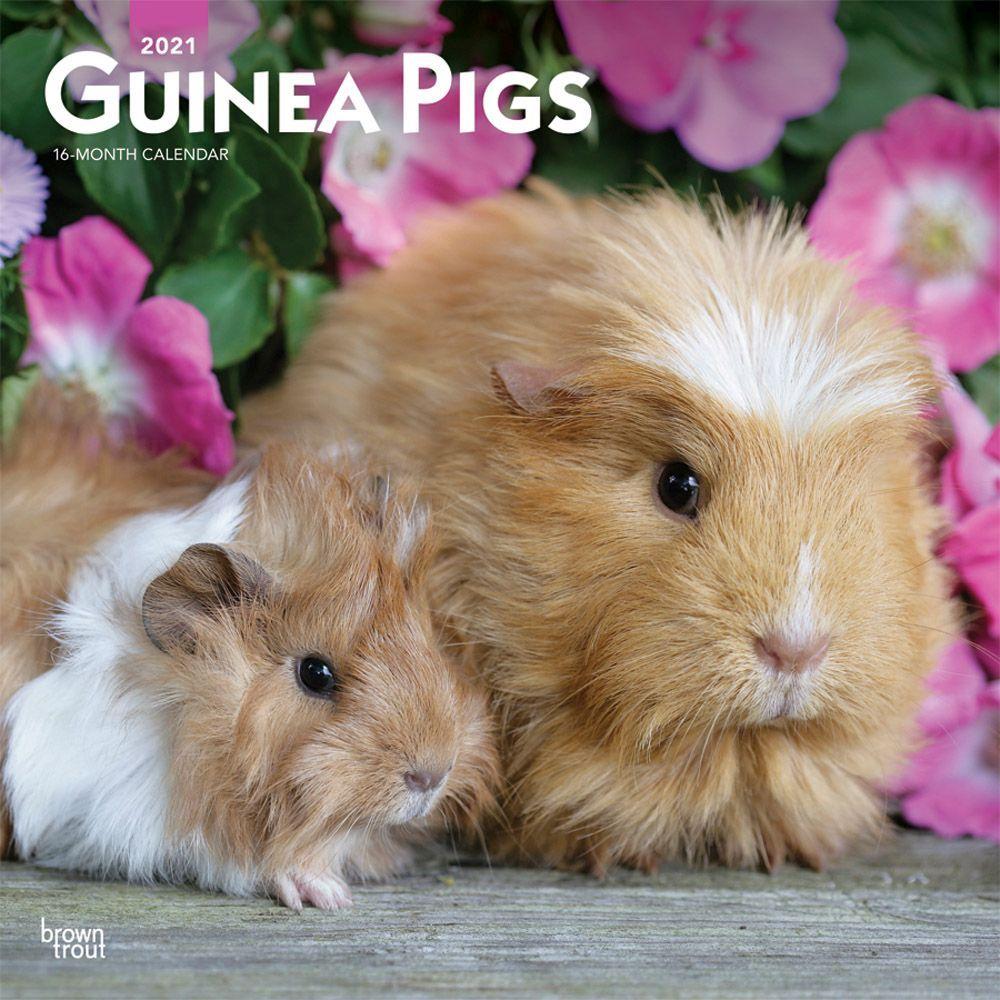 2021 Guinea Pigs Wall Calendar