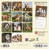 Bulldog-Puppies-Mini-Wall-Calendar-image-8