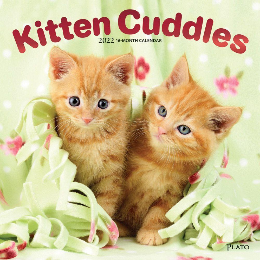 Kitten Cuddles 2022 Wall Calendar