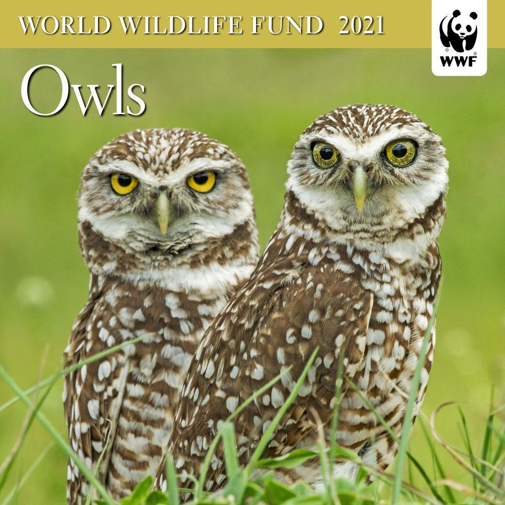 Owls WWF 2021 Mini Wall Calendar