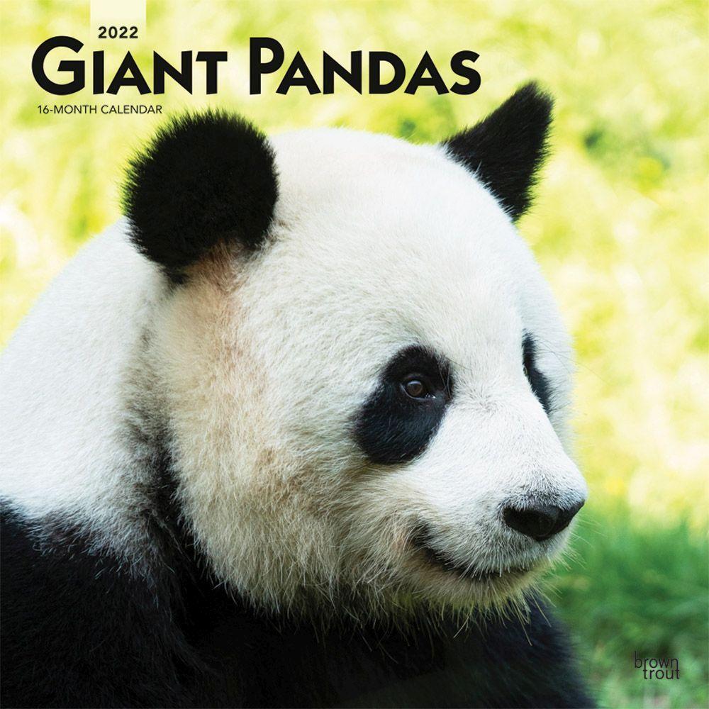 Pandas 2022 Wall Calendar