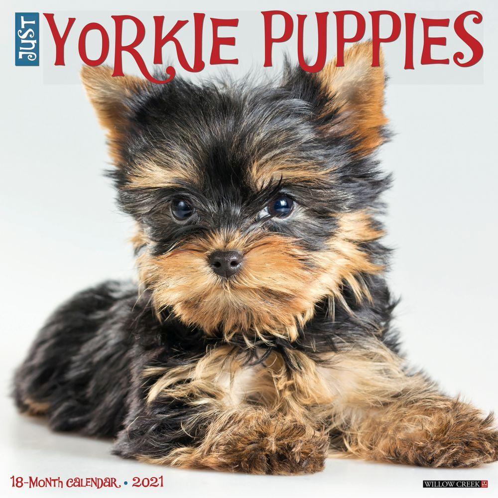 Just Yorkie Puppies 2021 Wall Calendar