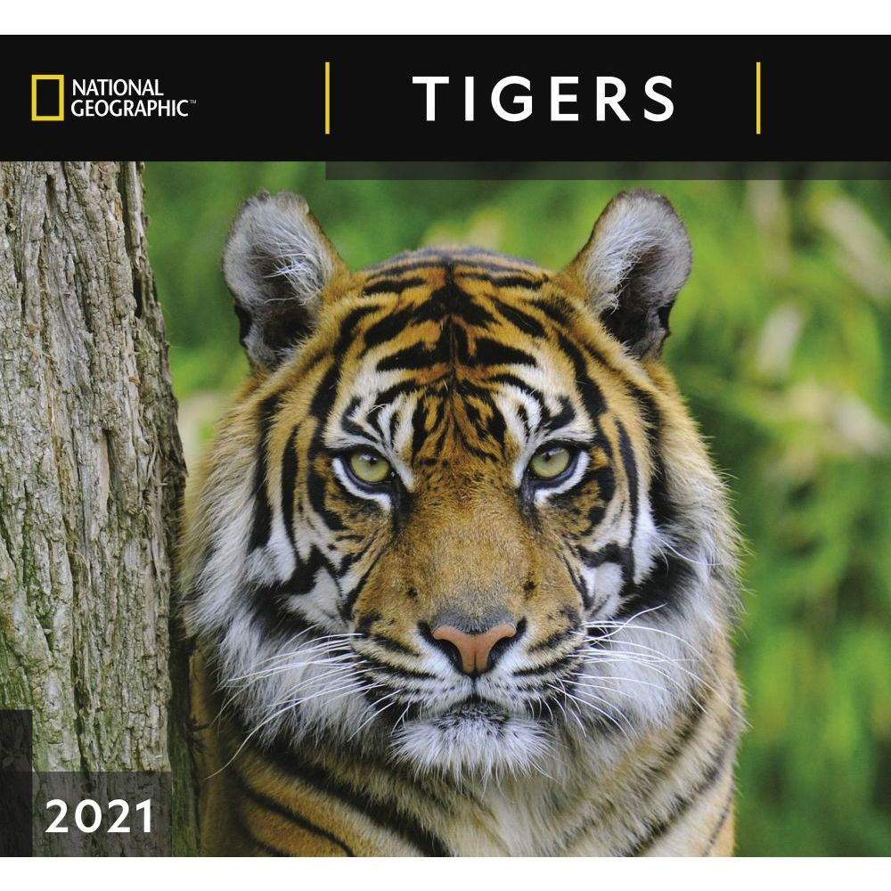 Tigers National Geographic 2021 Wall Calendar