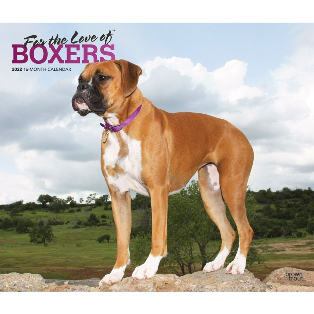 Boxers 2022 Deluxe Wall Calendar