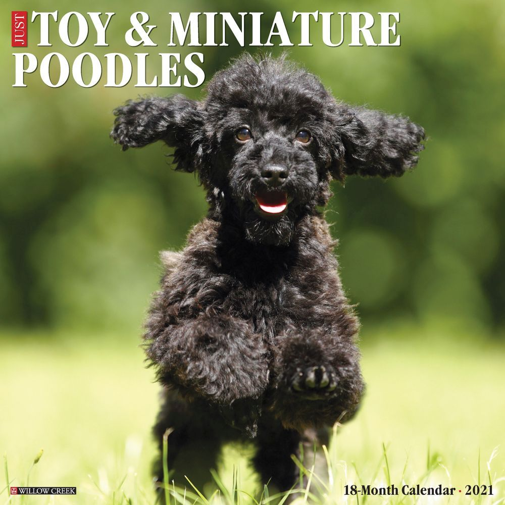 Toy and Miniature Poodles 2021 Wall Calendar