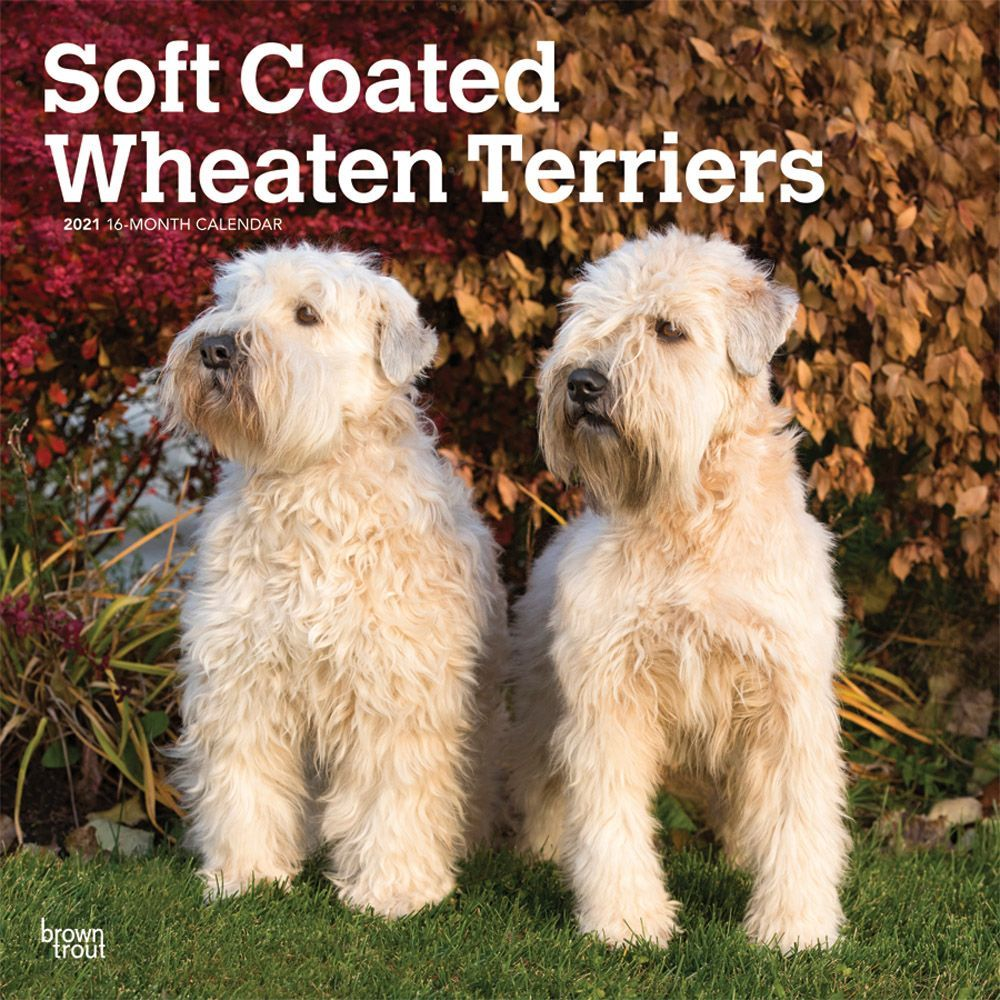Wheaten Terriers Soft Coated 2021 Wall Calendar