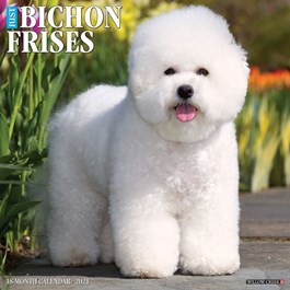 Just Bichons Frise Wall Calendar