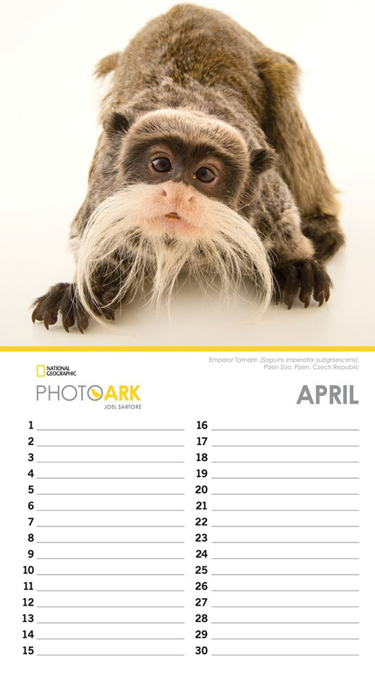 Photo-Ark-National-Geographic-Non-Dated-Calendar-3