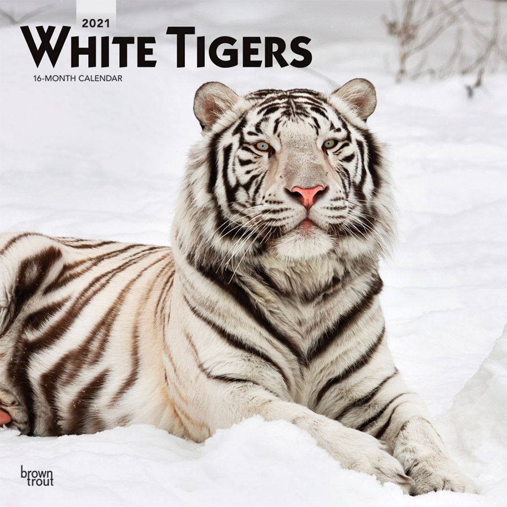 Tigers White 2021 Wall Calendar