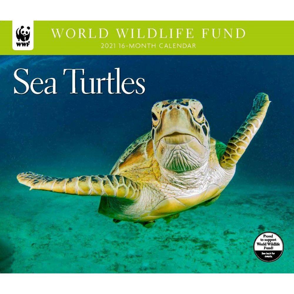 Sea Turtles WWF 2021 Wall Calendar