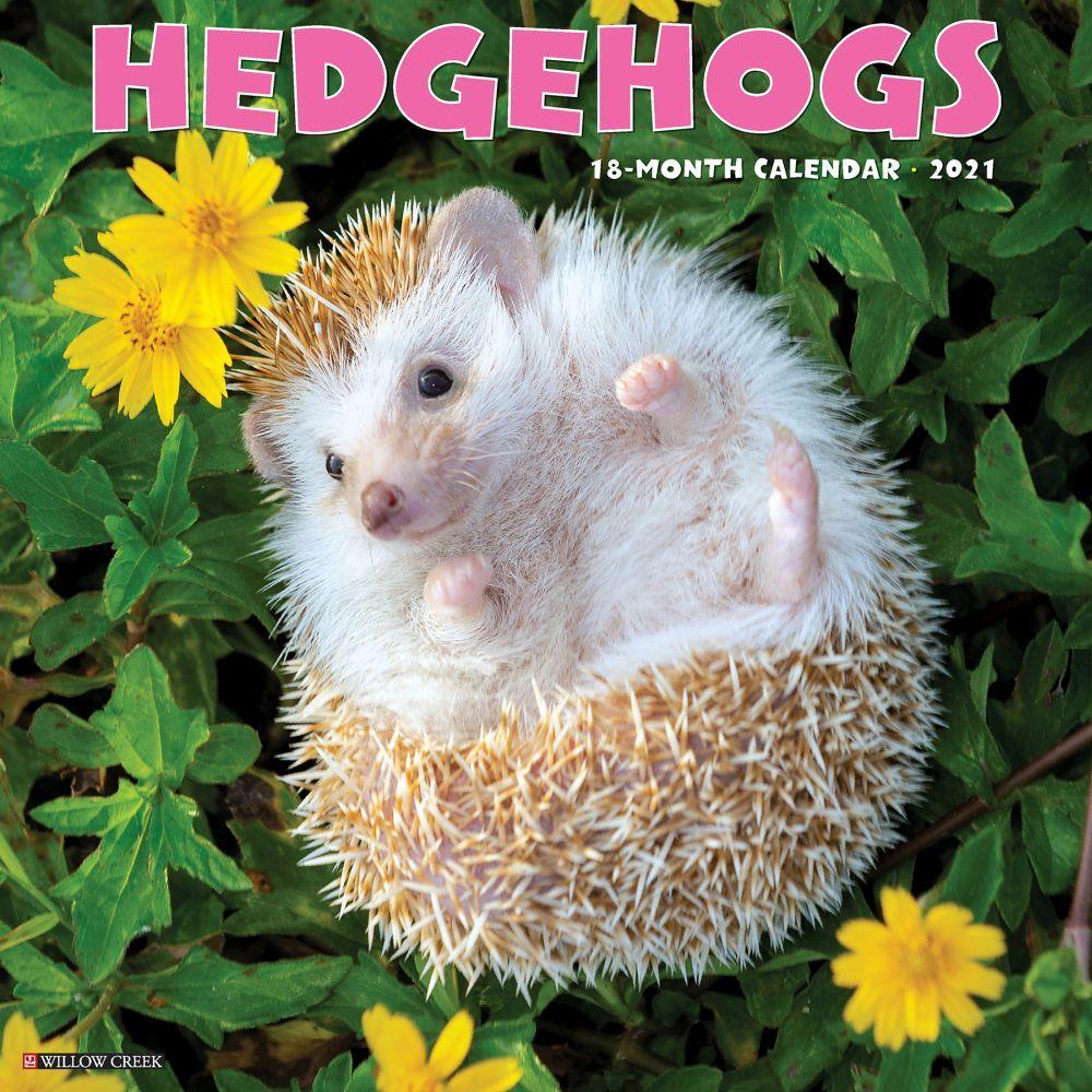 Hedgehogs 2021 Wall Calendar