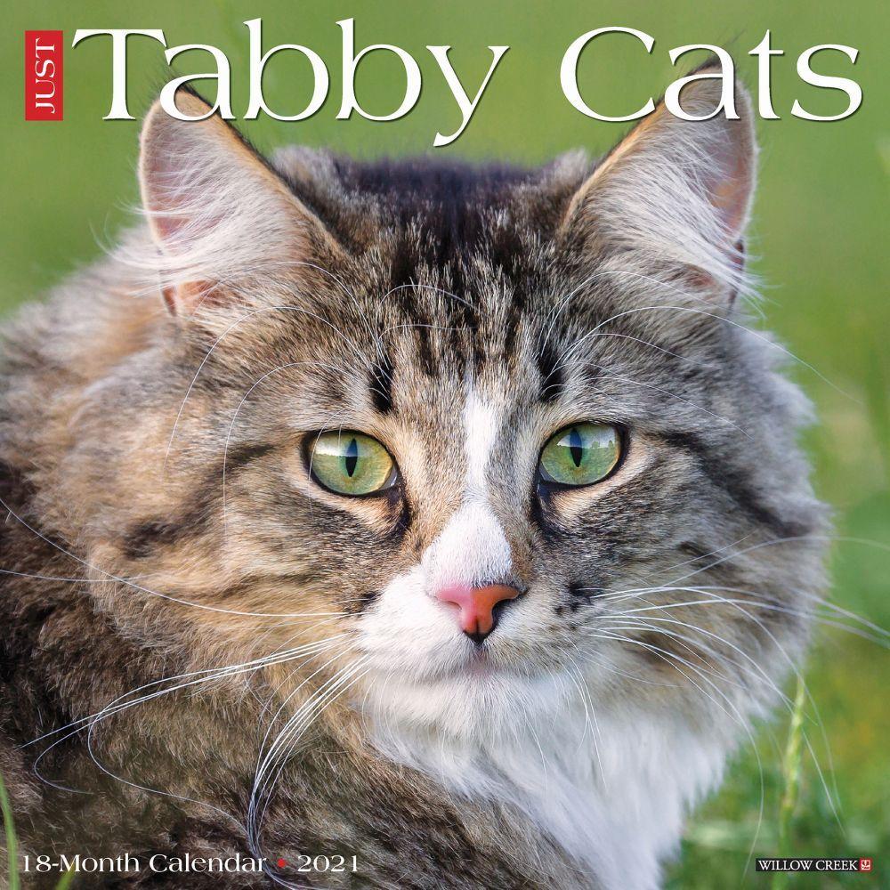 Tabby Cats 2021 Wall Calendar