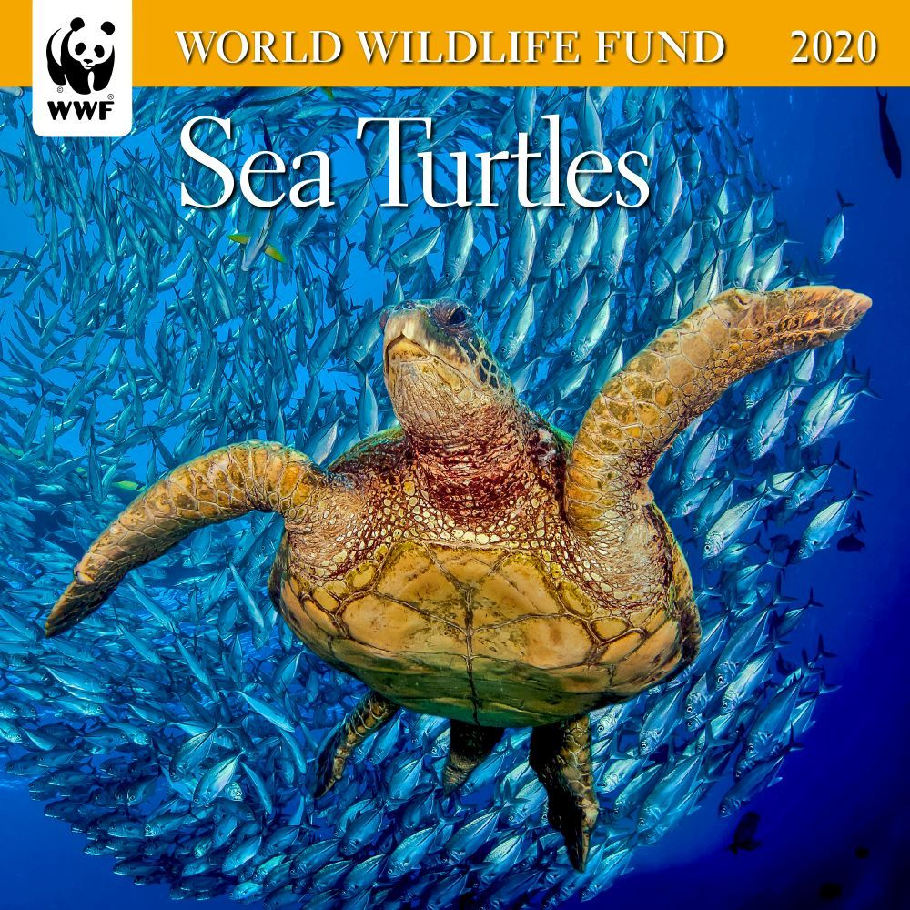 Sea-Turtles-WWF-Mini-Wall-Calendar-1