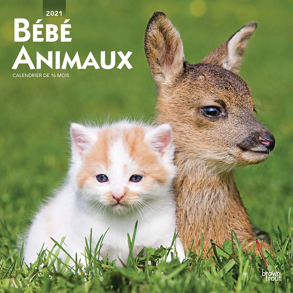 2021 Baby Animals Wall Calendar (FRENCH)