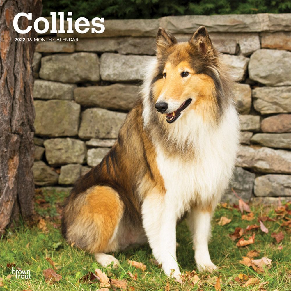 Collies 2022 Wall Calendar
