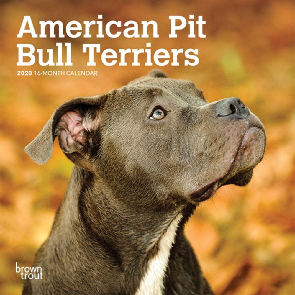 American Pit Bull Terriers Mini Wall Calendar 2021 | eBay