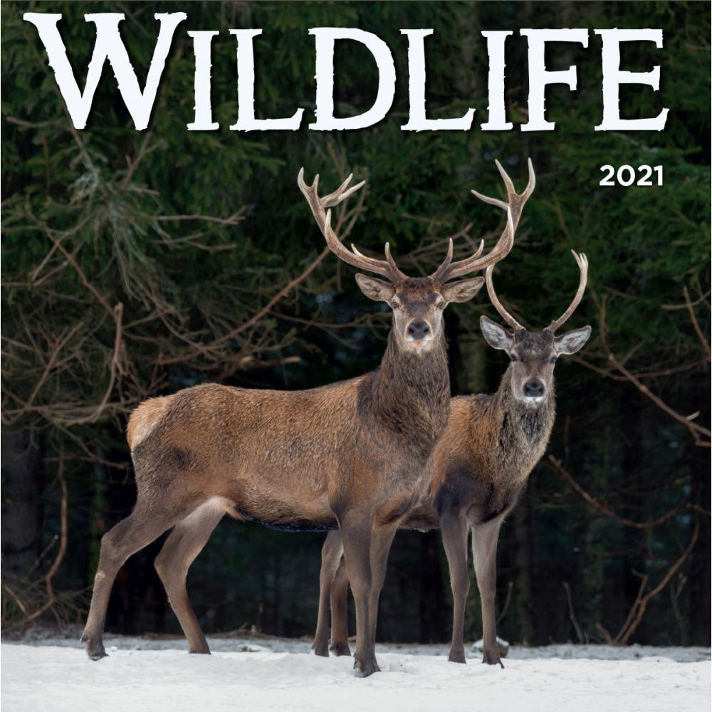 2021 Wildlife Wall Calendar