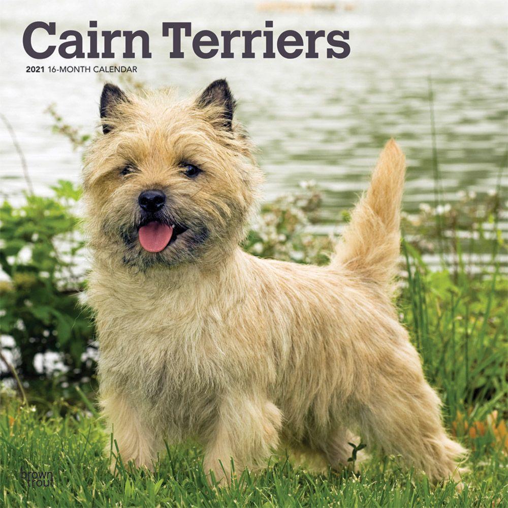 Cairn Terriers Wall Calendar - Calendars.com