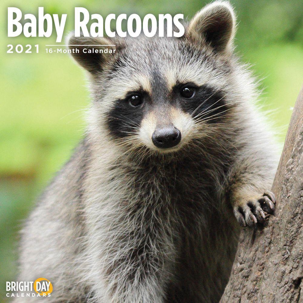 2021 Baby Raccoons Wall Calendar