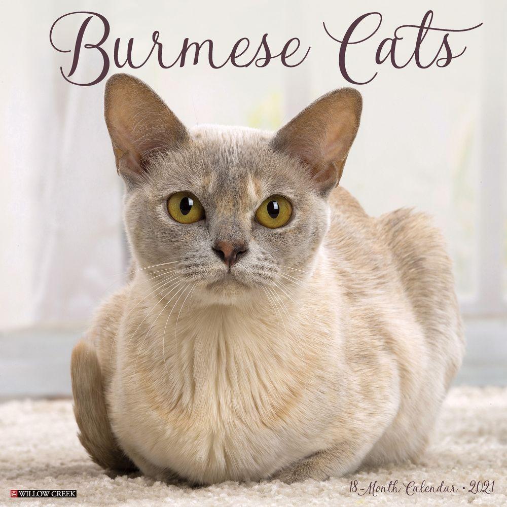 Burmese Cats 2021 Wall Calendar