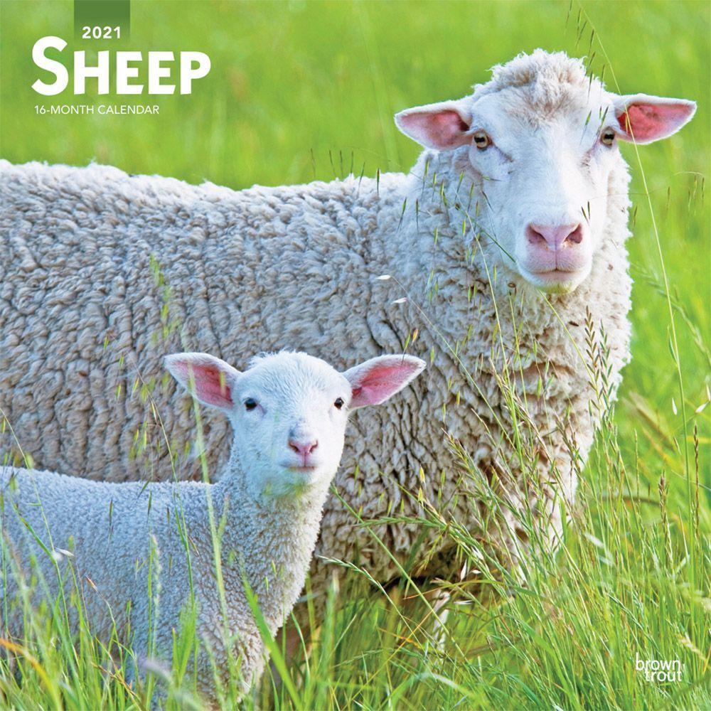 Sheep 2021 Wall Calendar