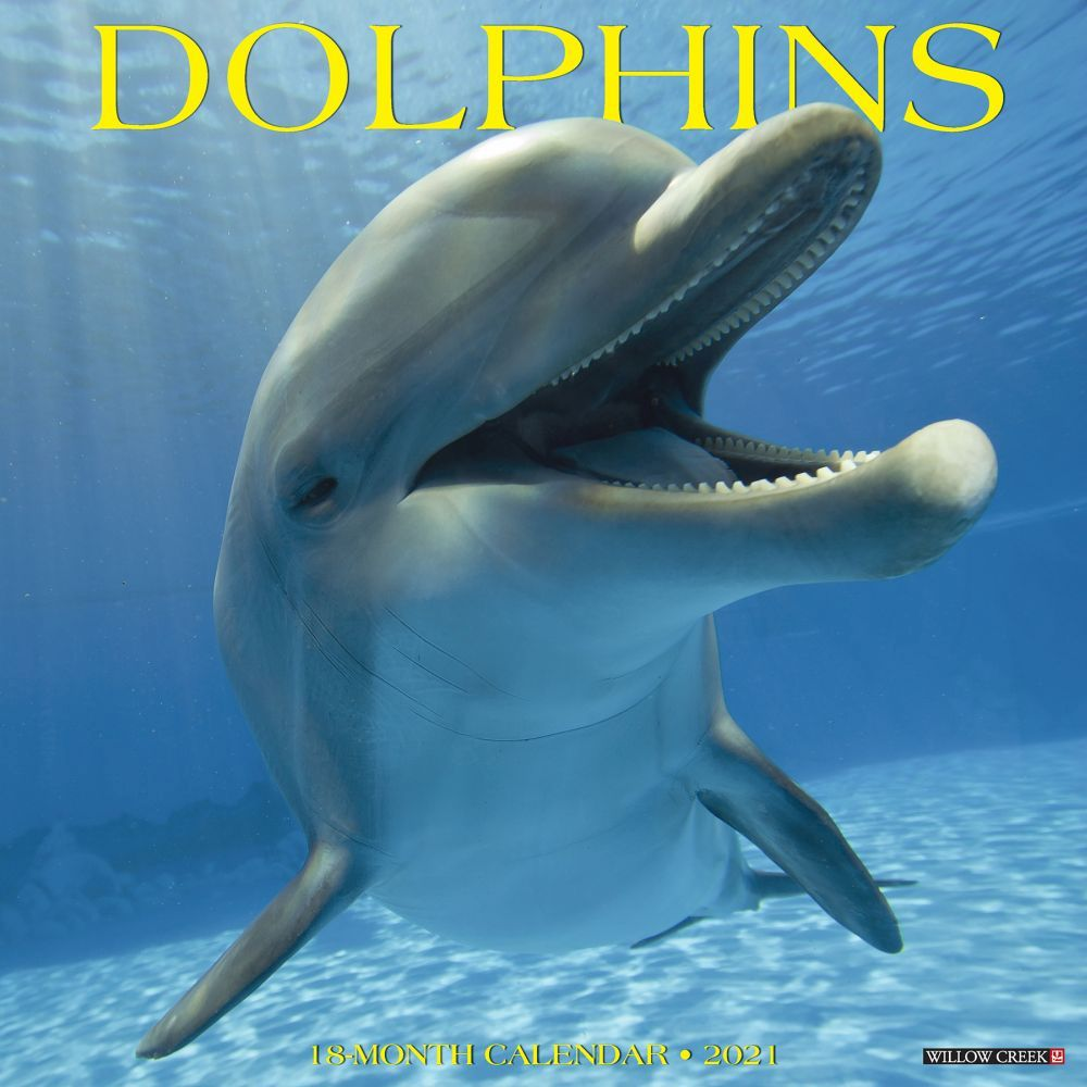 Dolphins 2021 Wall Calendar