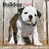 Bulldog-Puppies-2022-Mini-Wall-Calendar-image-main