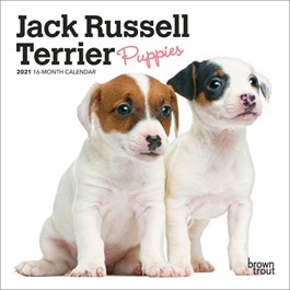 Jack Russell Terrier Puppies Mini Wall Calendar