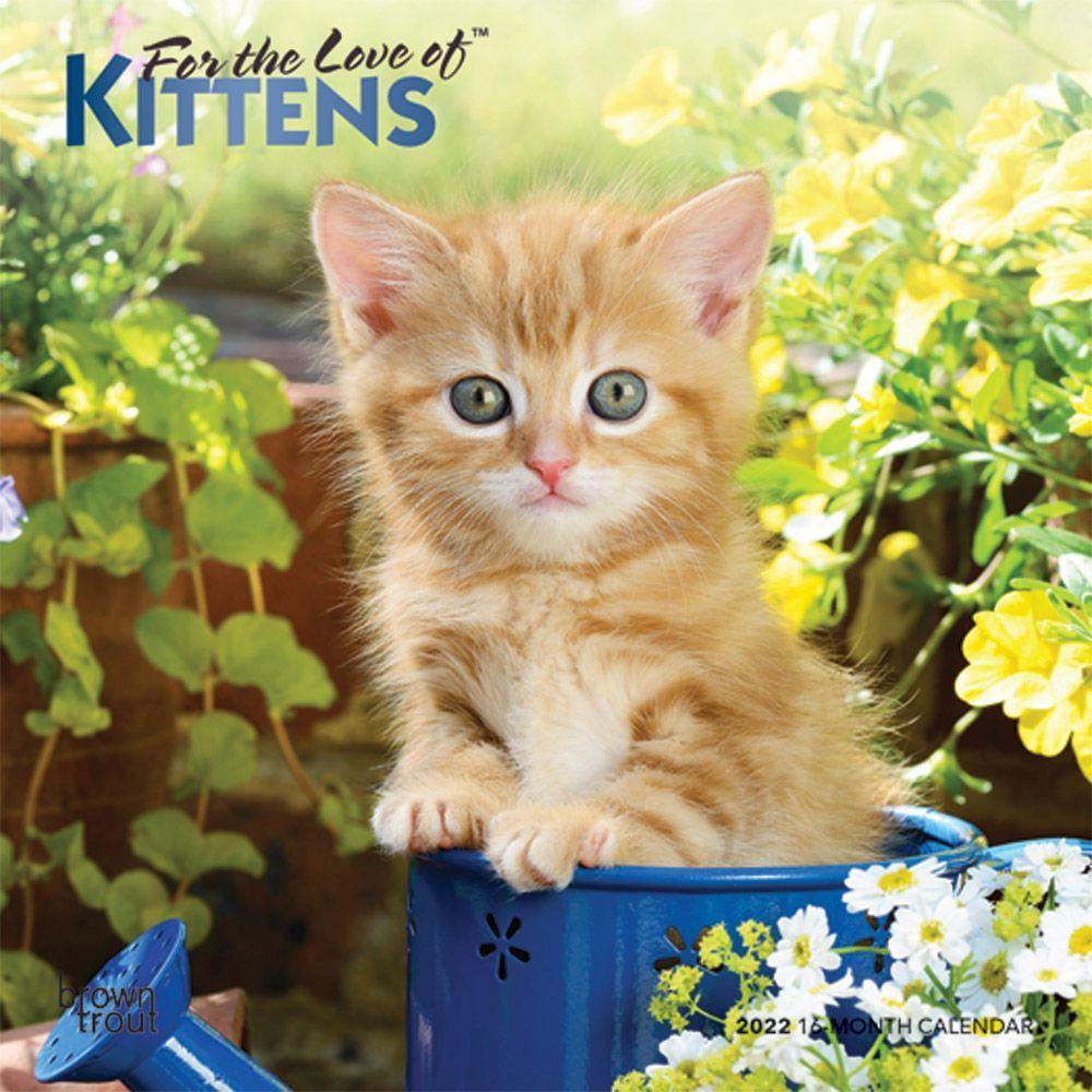 Love of Kittens 2022 Mini Wall Calendar
