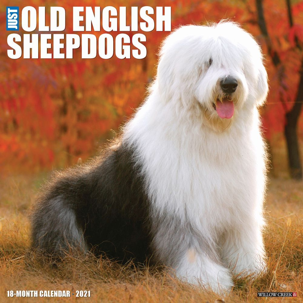 2021 Old English Sheepdogs 2021 Wall Calendar