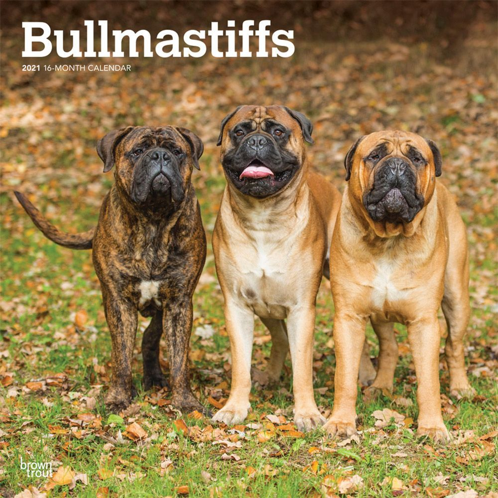 Bullmastiff Dogs Coloring Pages for Kids – Animal Coloring Pages ... | 1000x1000