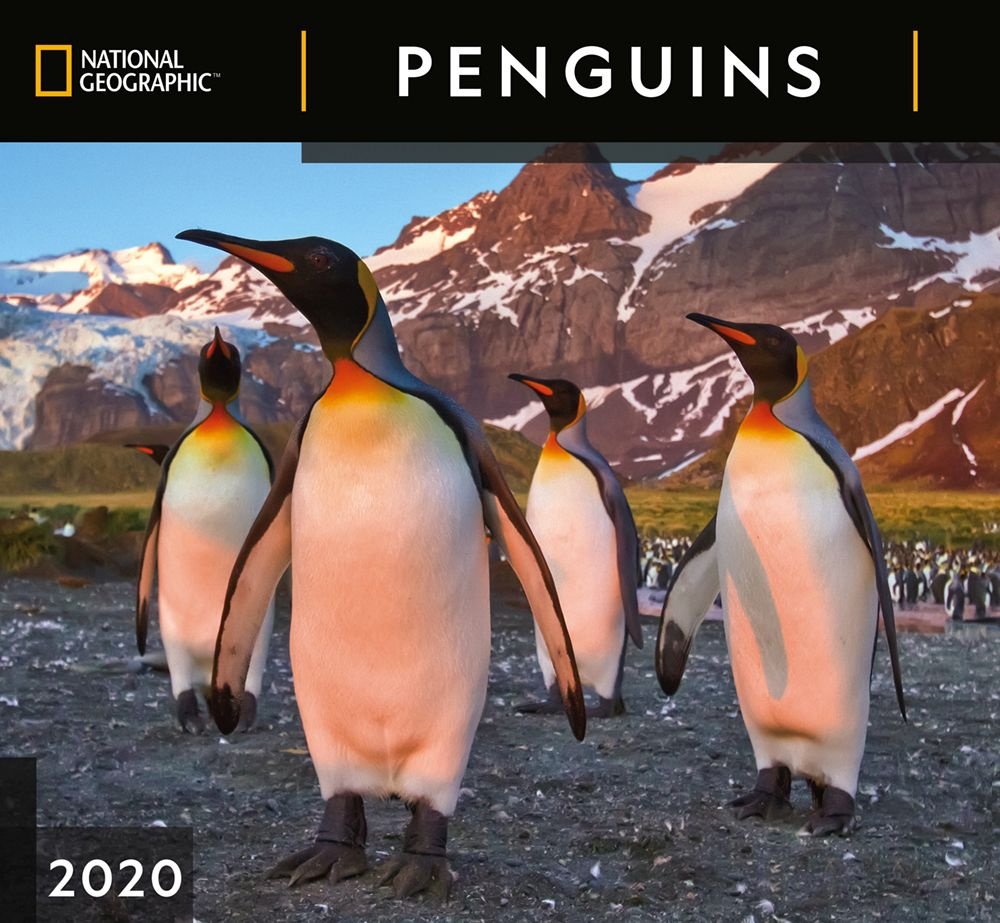 Penguins National Geographic 2021 Wall Calendar