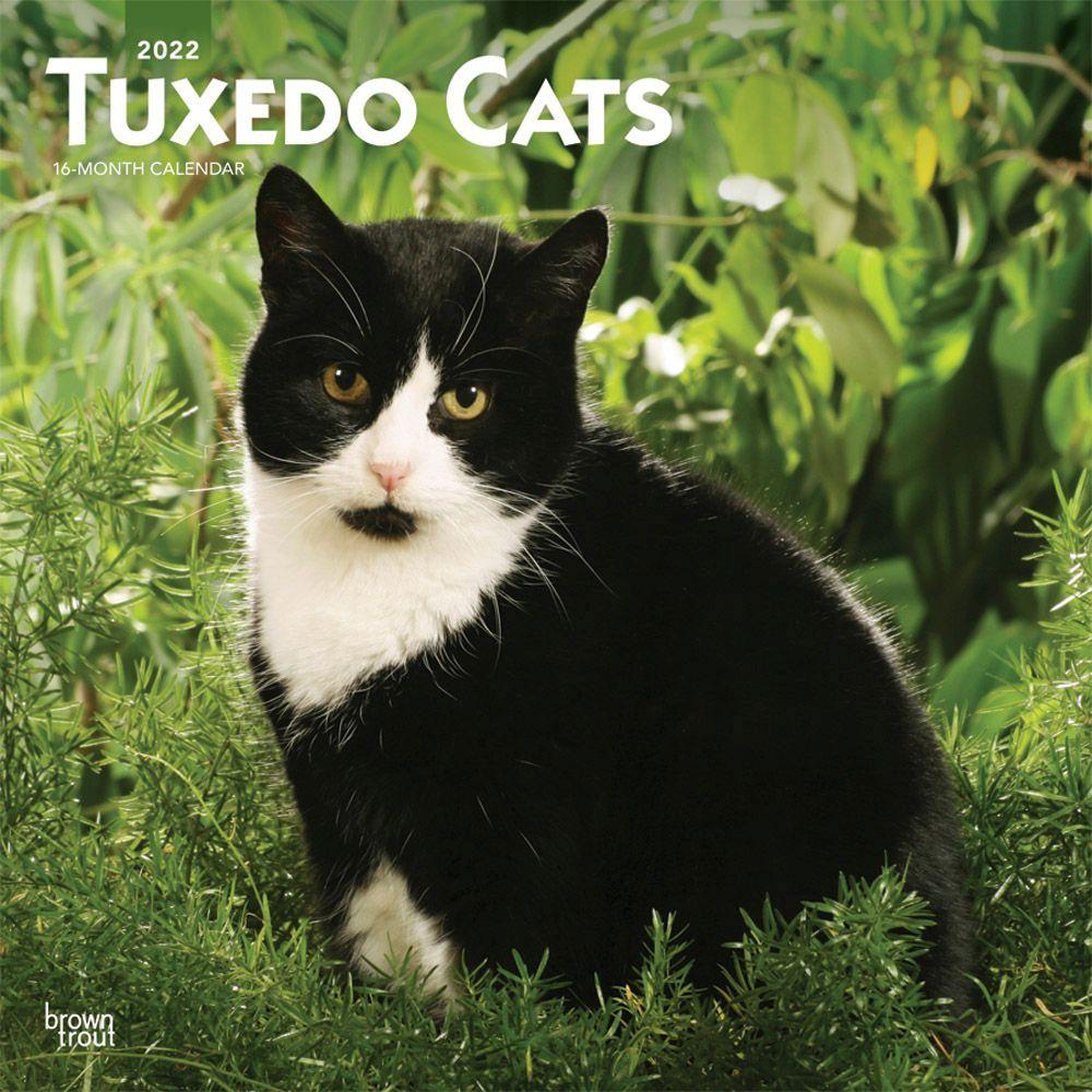 Cats Tuxedo 2022 Wall Calendar
