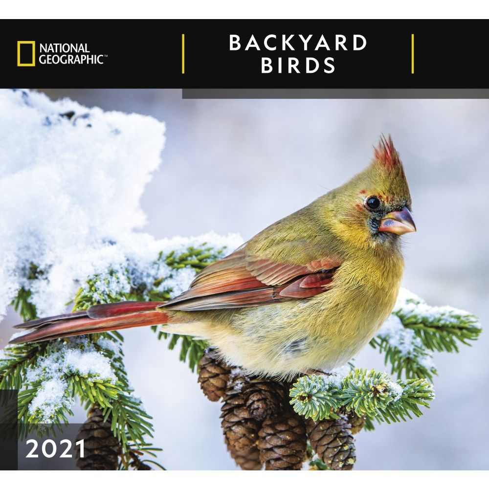Birds Backyard National Geographic 2021 Wall Calendar