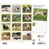 pugs-deluxe-wall-calendar-image-2