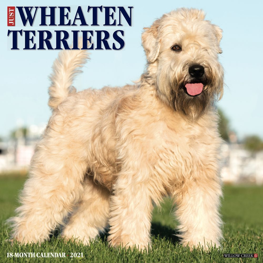 Just Wheaton Terriers 2020 Wall Calendar