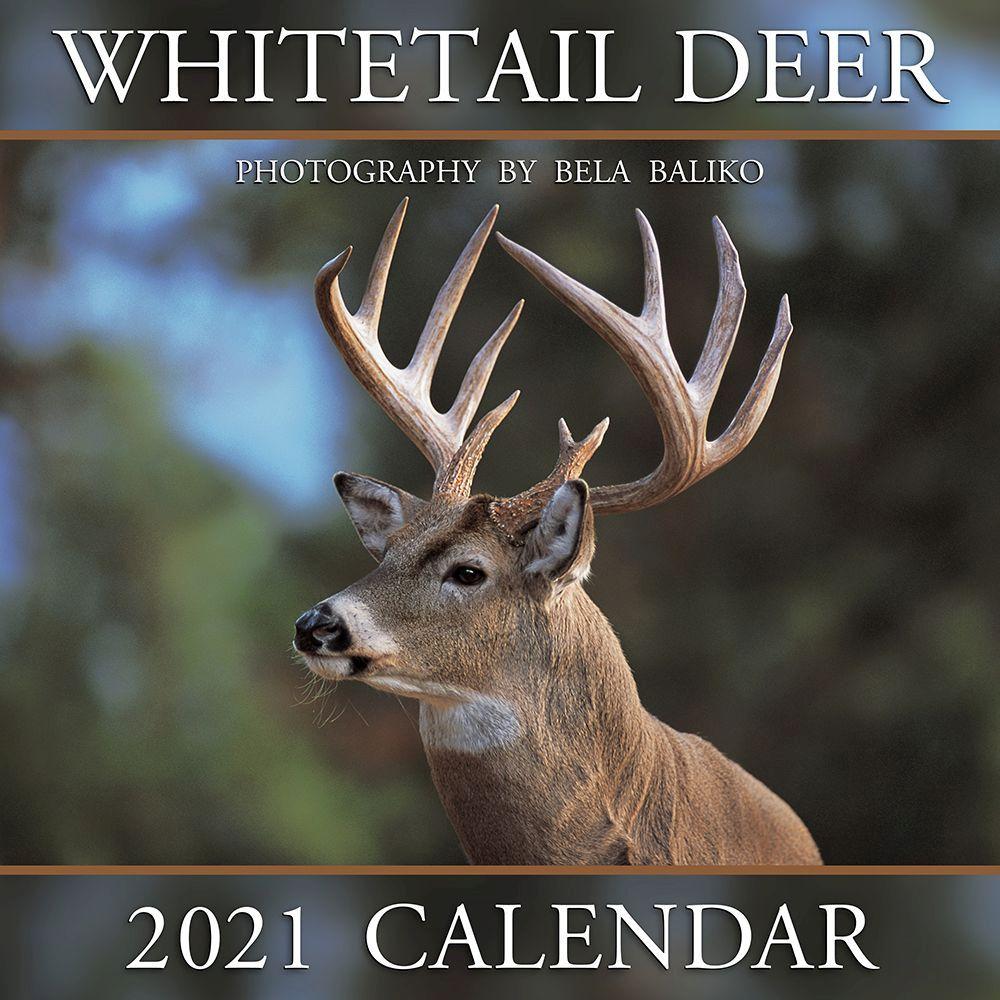 2021 Whitetail Deer Wall Calendar