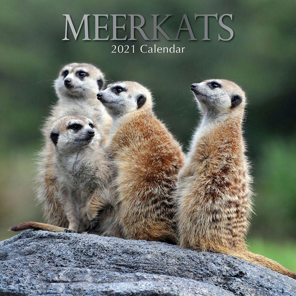 2021 Meerkats Wall Calendar