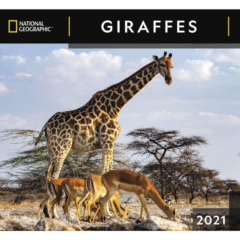 2021 Giraffes National Geographic Wall Calendar