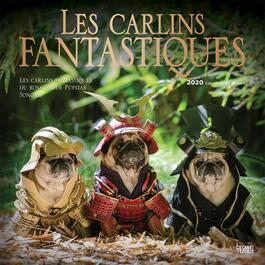 Les carlins fantastique Wall Calendar (FRENCH)