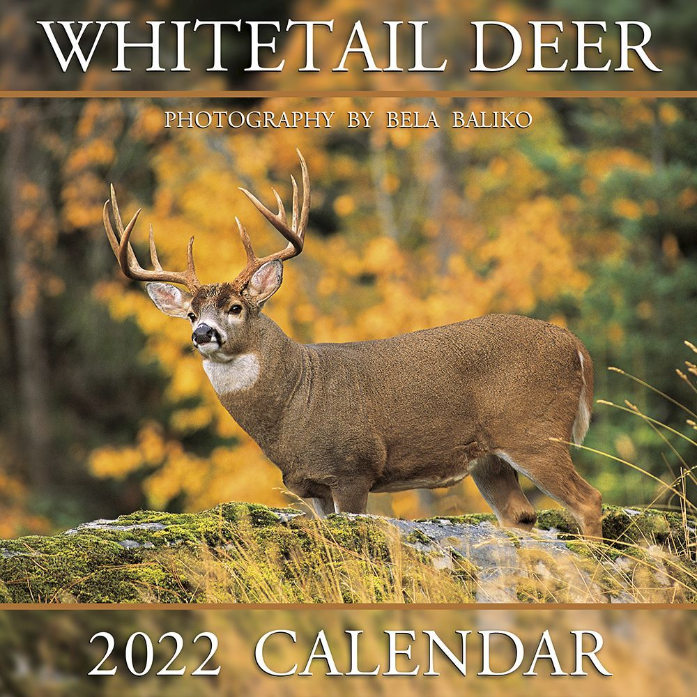 Whitetail Deer 2022 Wall Calendar
