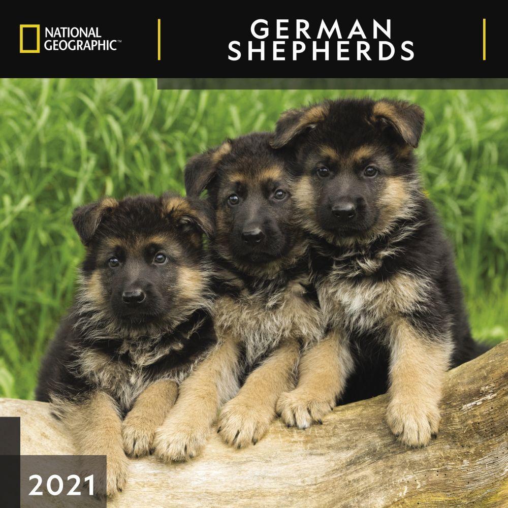 German Shepherds National Geographic 2021 Wall Calendar