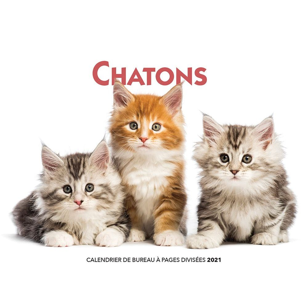 2021 Chatons Double Easel Calendar (French)