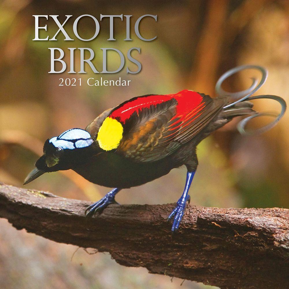 2021 Exotic Birds Wall Calendar