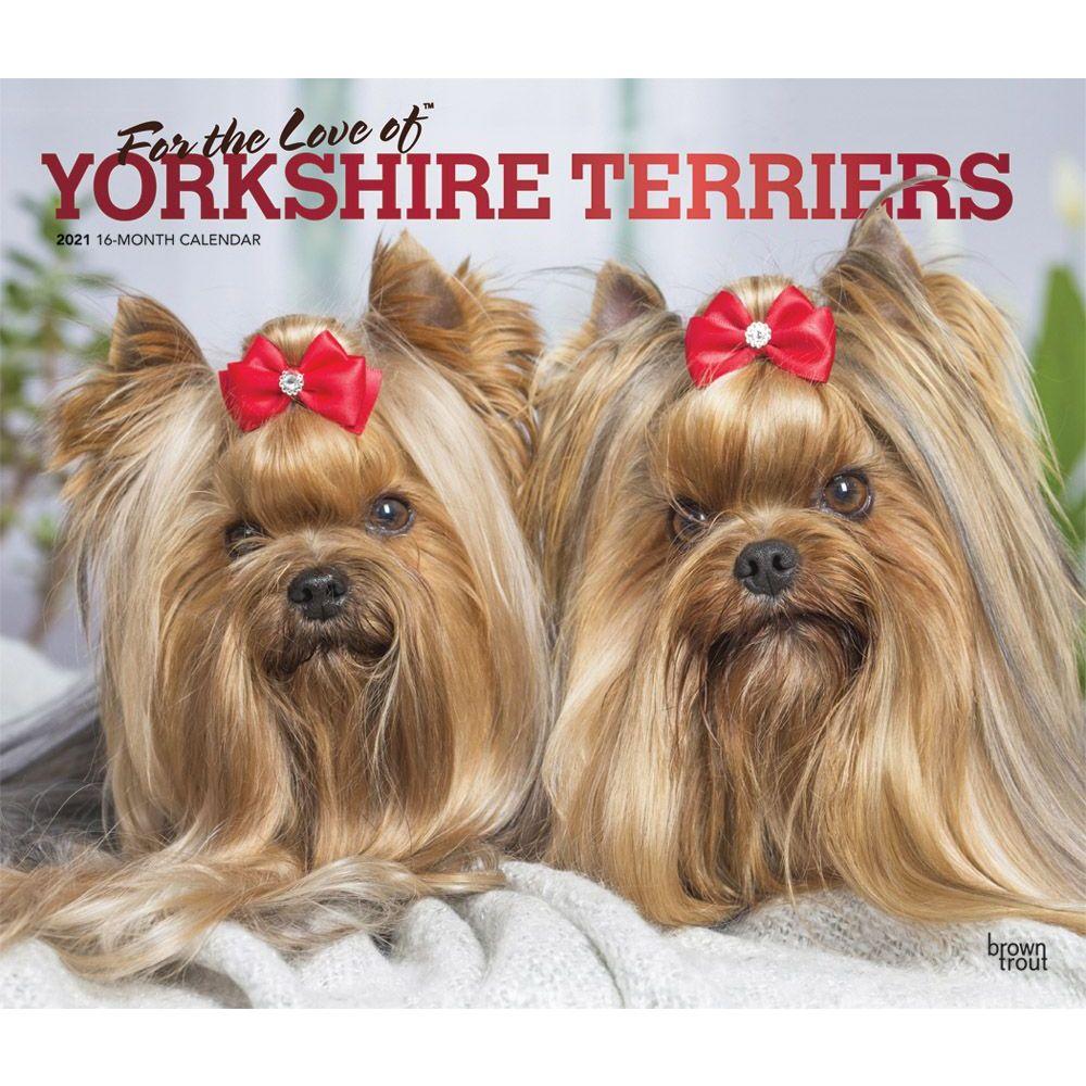 Yorkshire Terriers Deluxe 2021 Wall Calendar