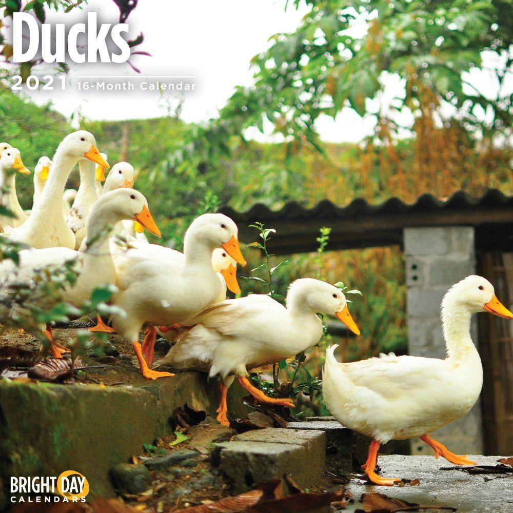 Ducks 2021 Wall Calendar