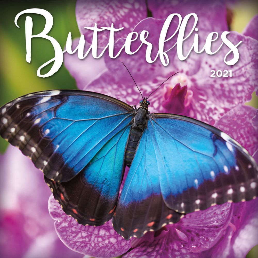Butterflies 2021 Mini Wall Calendar
