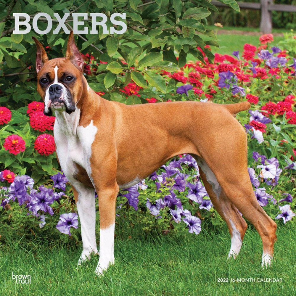 Boxers 2022 Wall Calendar