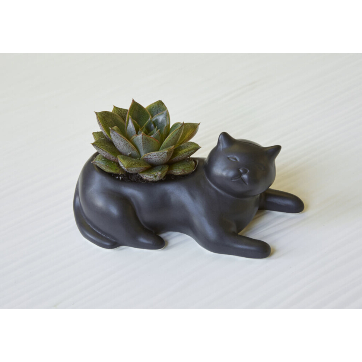 image Cosmo-The-Black-Cat-Planter-Main-Image